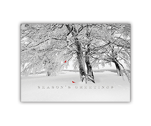 Winter scenes holiday greeting card 8 stock designs progress promotional products custom printed holiday greeting cards m4hsunfo